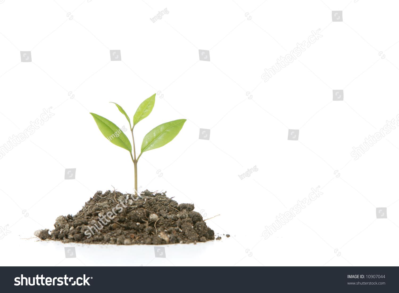 一个小植物在土堆工作室-背景/素材