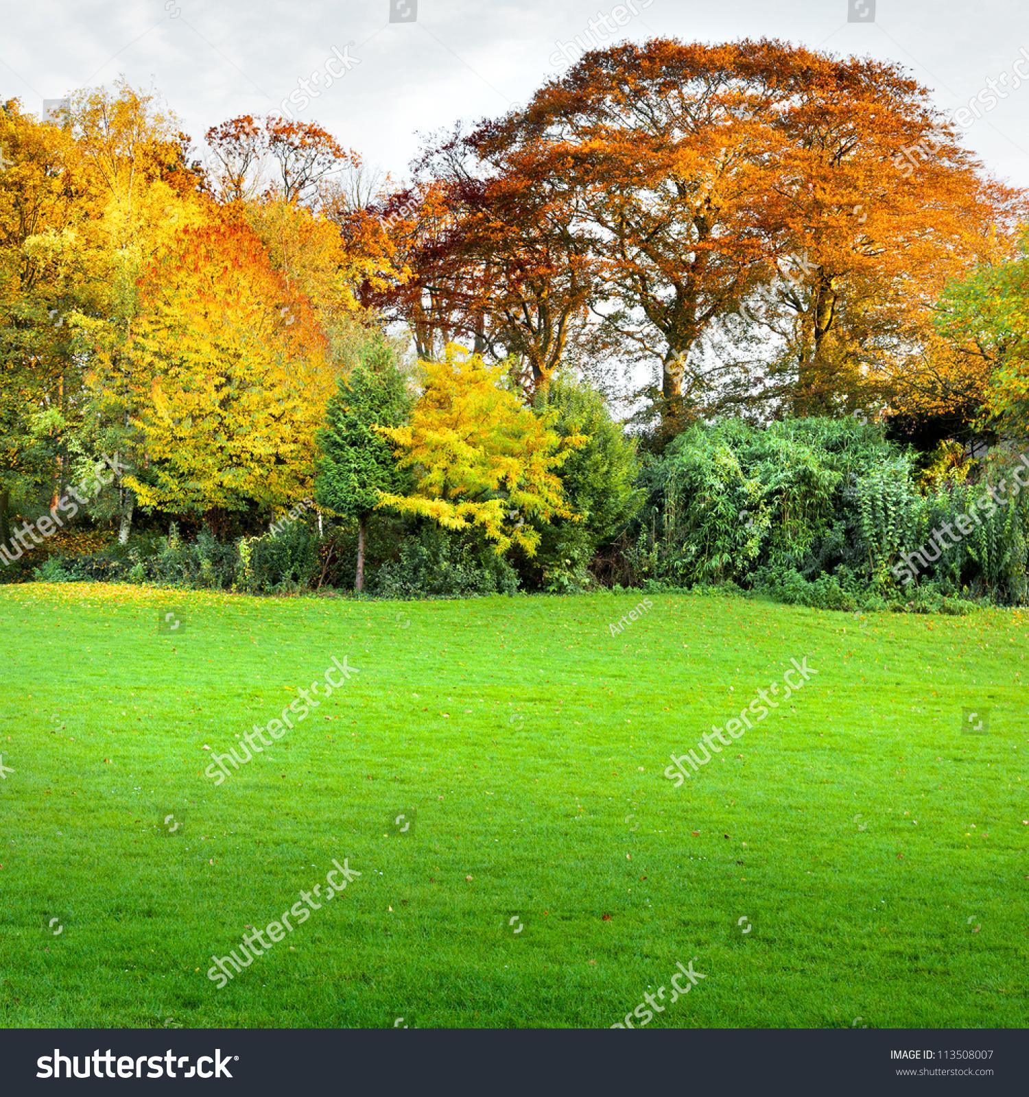 秋天的森林.-自然,公园图片