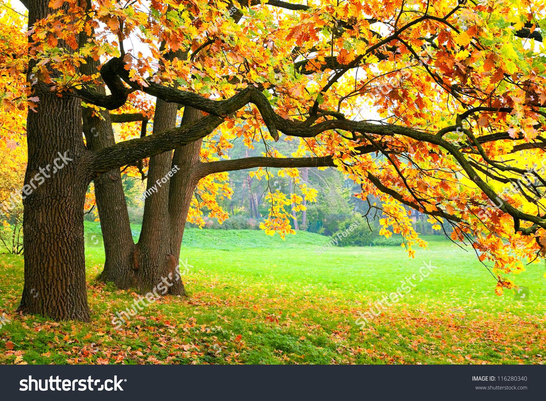秋天的树-自然,公园/户外-海洛创意(hellorf)-中国-.图片
