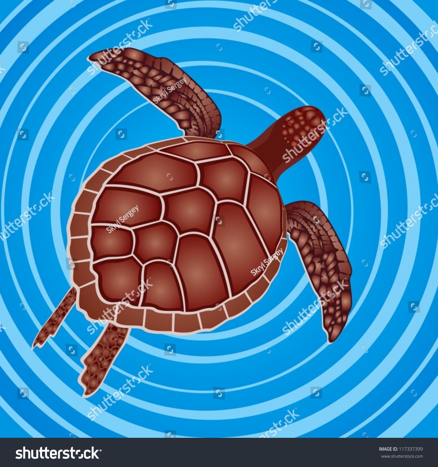 海洋生物.海龟在海里游泳