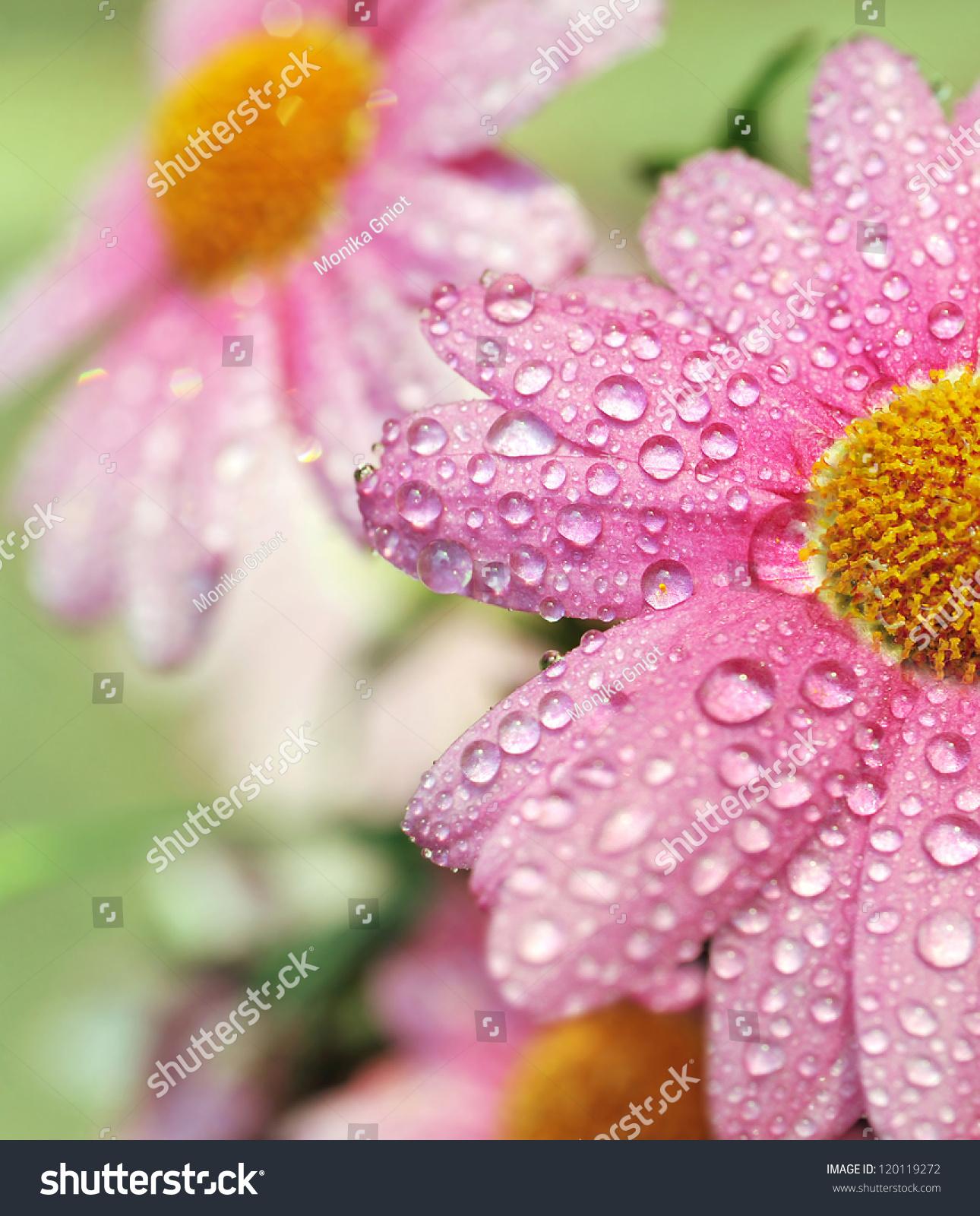 新微信花朵头像风景