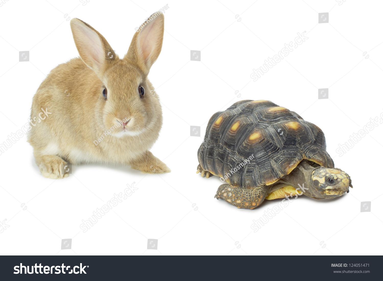 兔子和乌龟的形象,对白色背景-动物/野生生物-海洛()