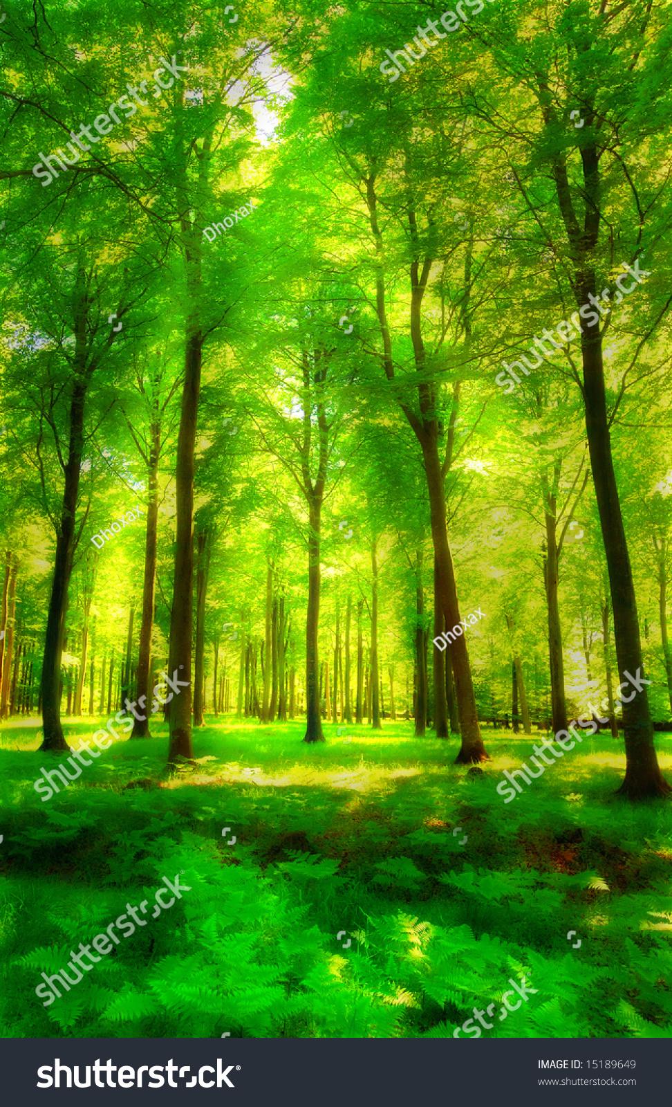 阳光在绿色和茂密的森林-公园/户外,背景/素材-海洛()