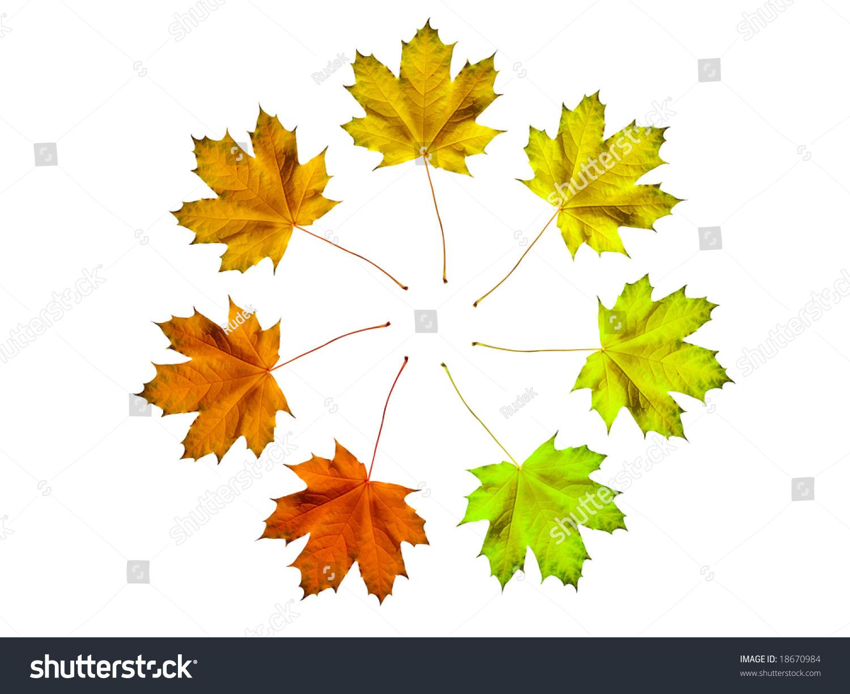 不同颜色的秋天树叶制作圆-抽象,自然-海洛创意()-合.