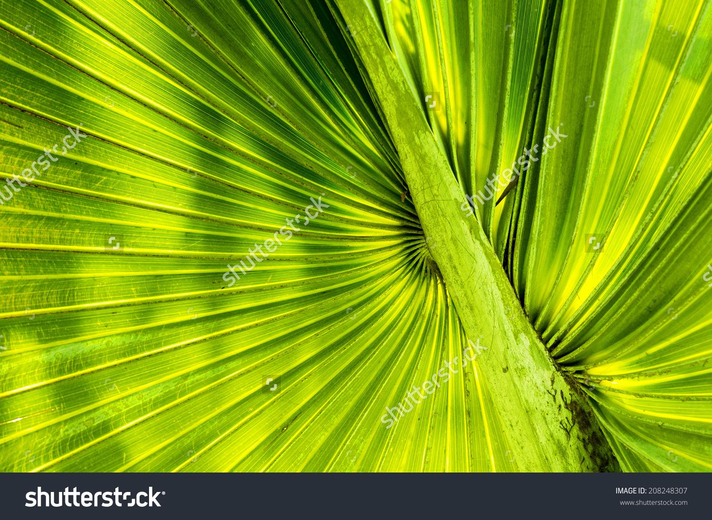 微信头像大绿叶