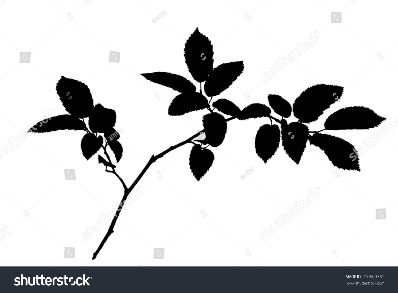 微信头像树枝风景图片