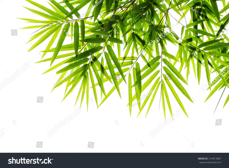 微信头像竹叶风景图片