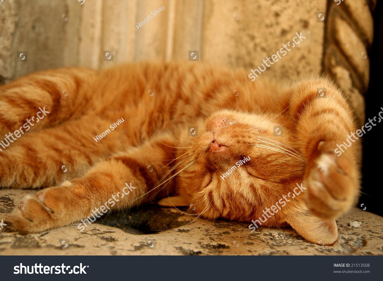 可爱的小猫睡觉-其它,动物/野生生物-海洛创意()