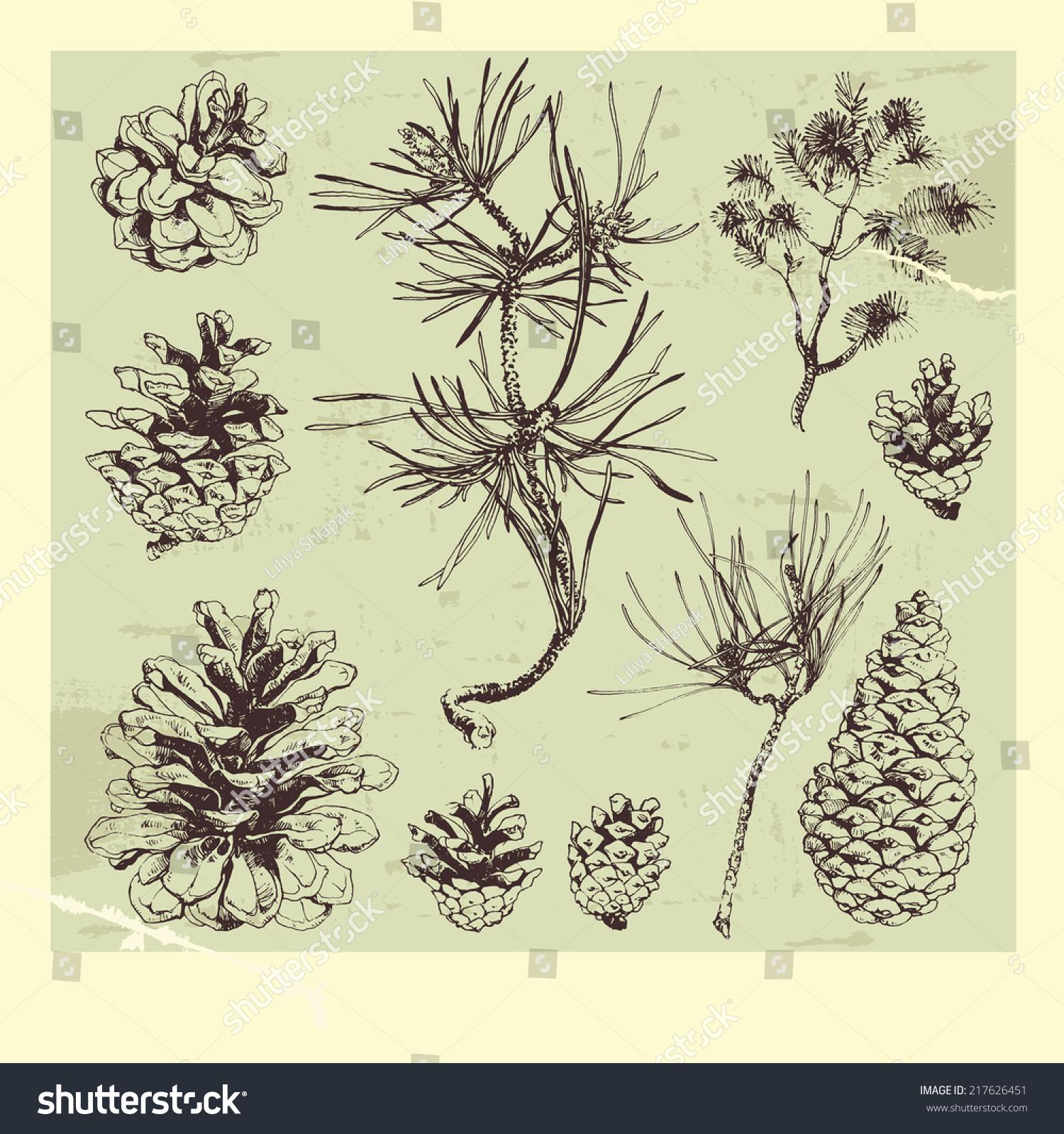 手工绘制的松树和树枝-自然,复古风格-海洛创意()-合.