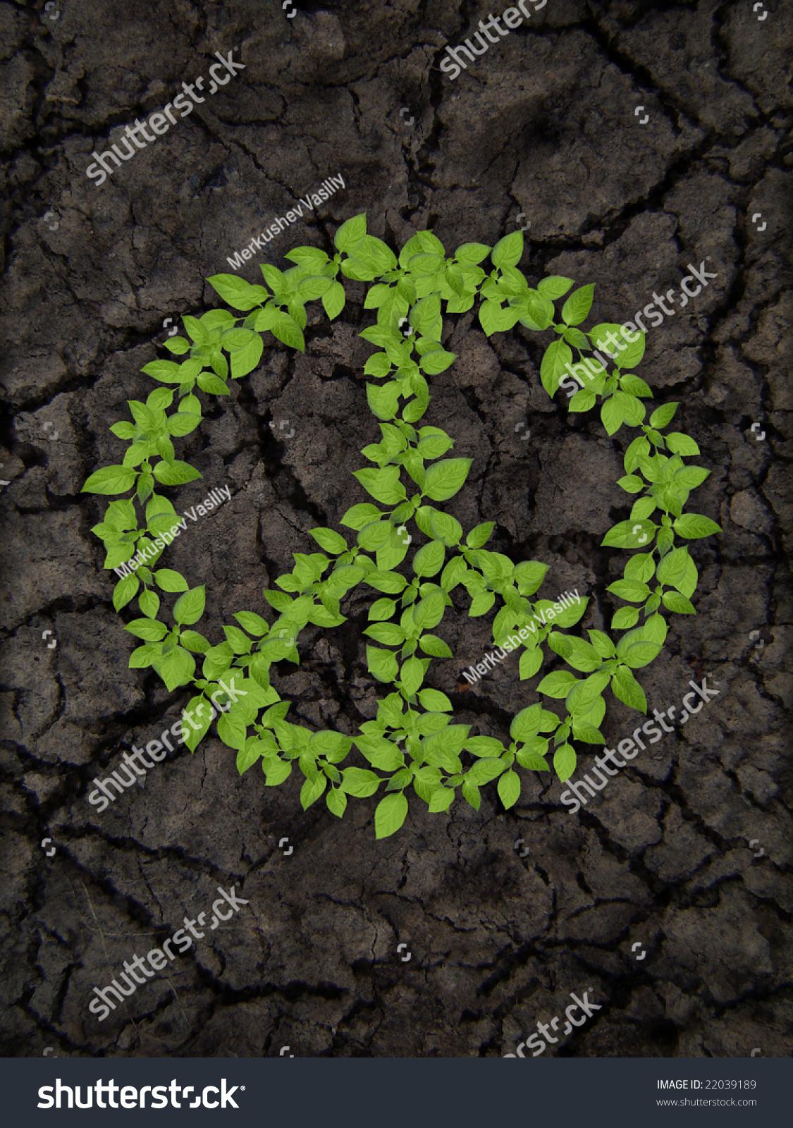 绿色植物对土壤cracky和平的营地