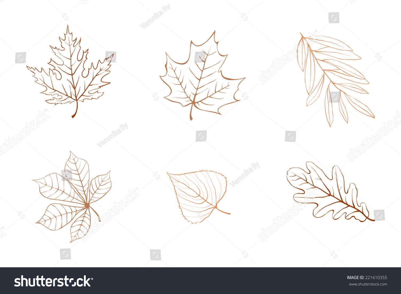 大纲秋叶之静美.枫木,栗色,无花果树,橡树叶子.-背景图片