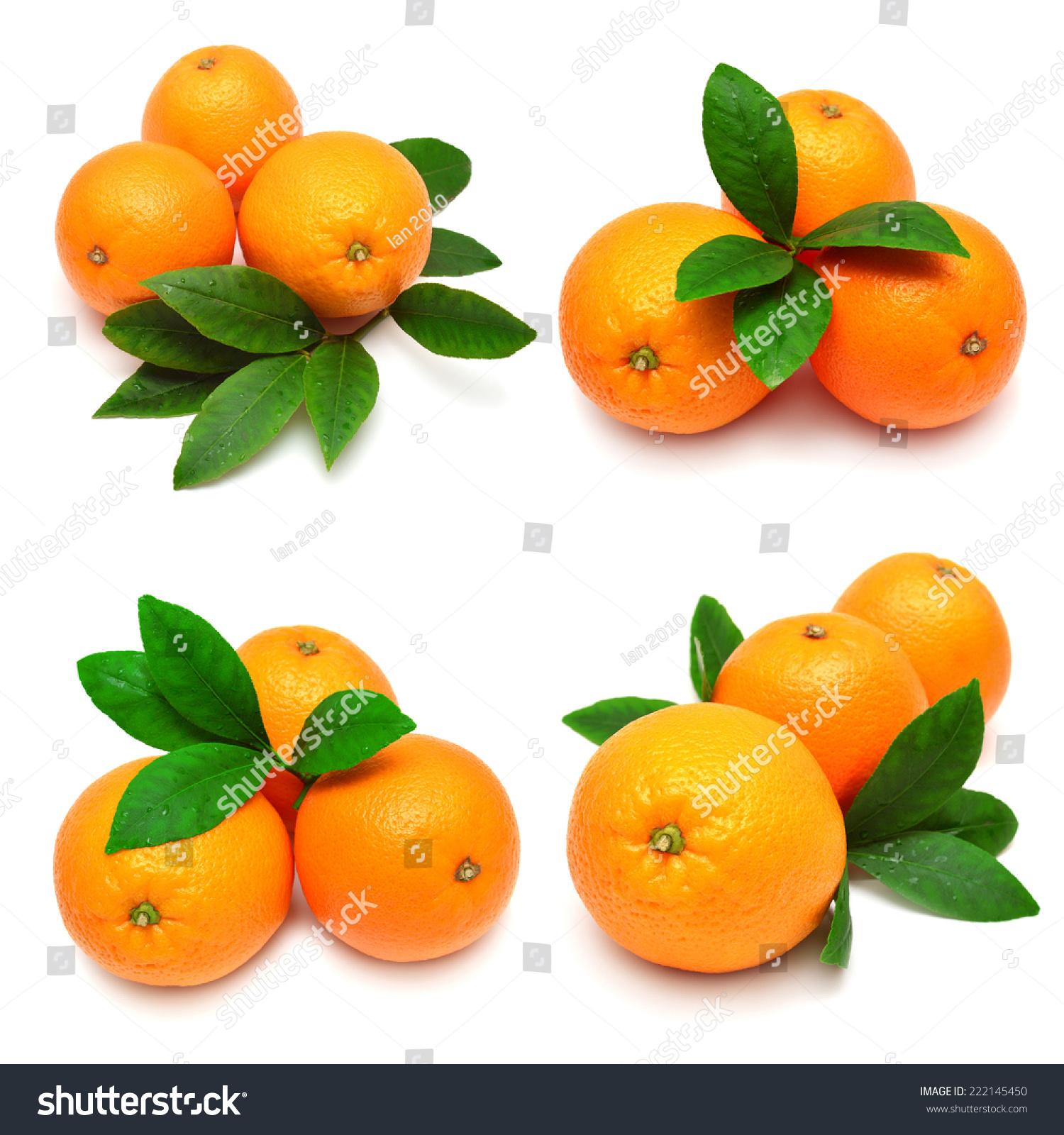 用树叶收集橙子孤立在白色背景