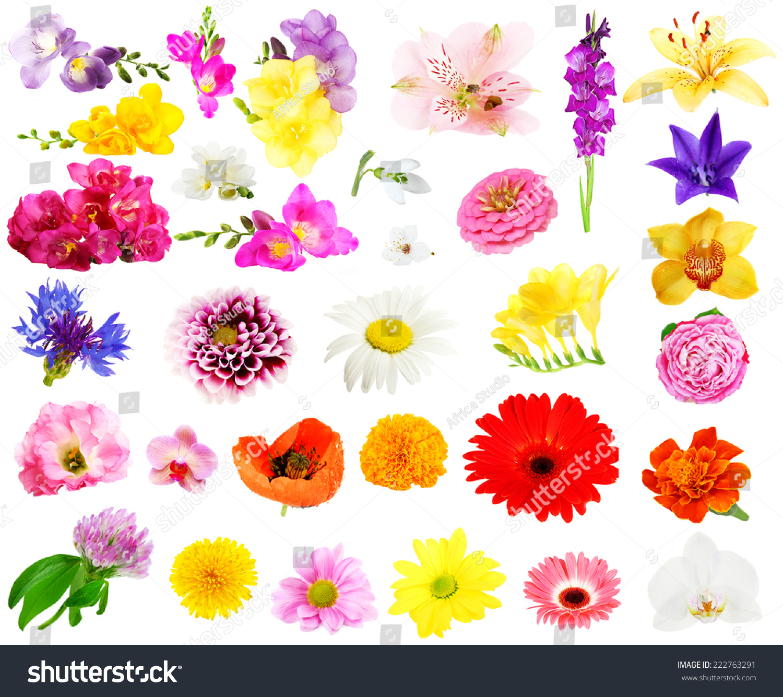 纸杯花朵手工制作大全图片