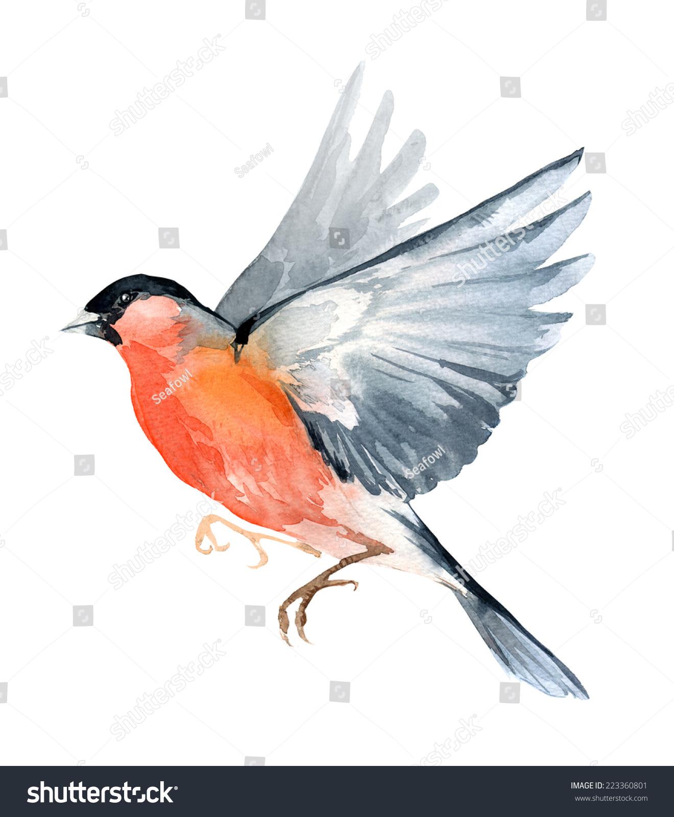 水彩画的野生植物冬季圣诞的知更鸟-背景/素材,自然