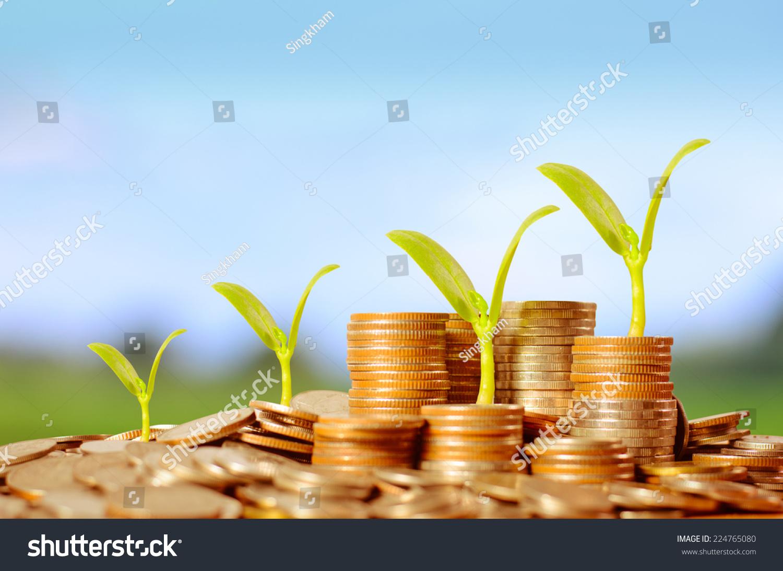 树生长在钱堆硬币在绿色和蓝色天空背景