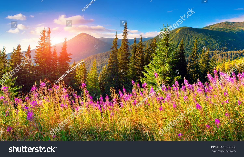 美丽的秋天的风景和粉红色的花朵在山里.-自然,公园