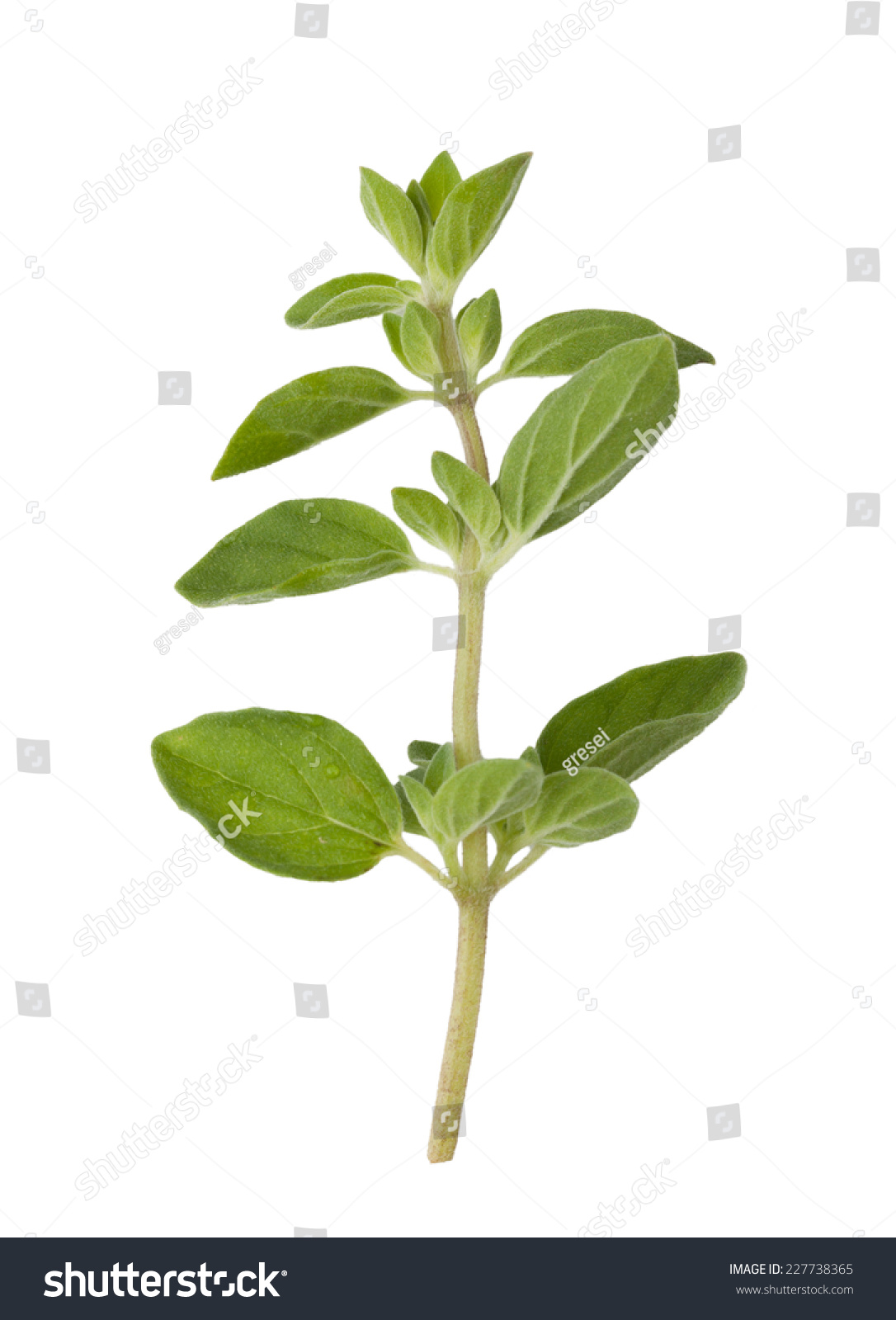 背景 壁纸 绿色 绿叶 树叶 植物 桌面 1085_1600 竖版 竖屏 手机