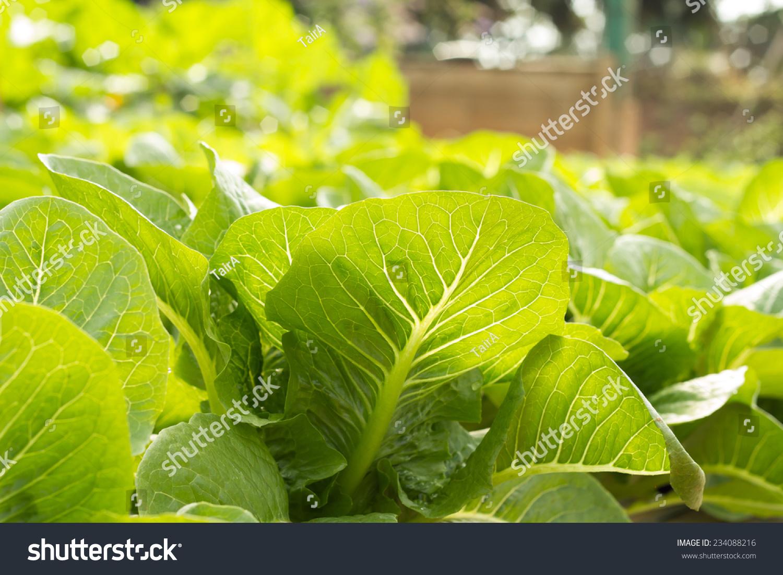 背景 壁纸 绿色 绿叶 树叶 植物 桌面 1500_1100