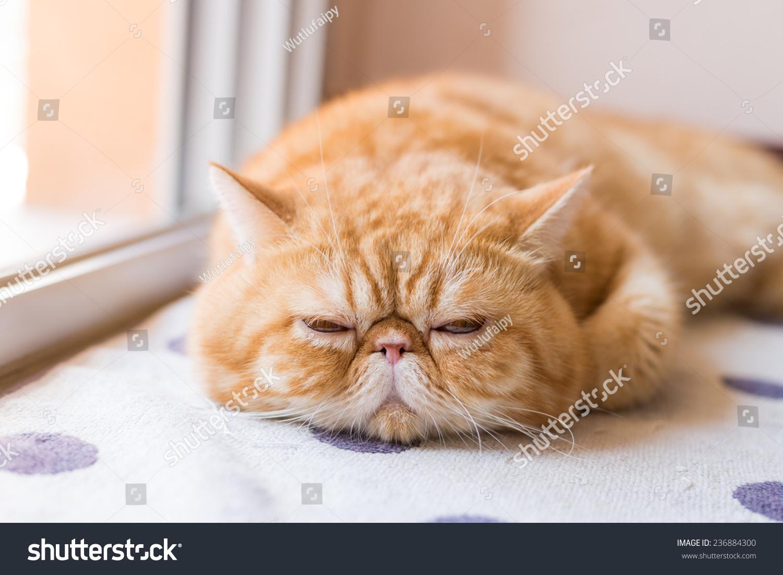 壁纸 动物 猫 猫咪 小猫 桌面 1500_1101