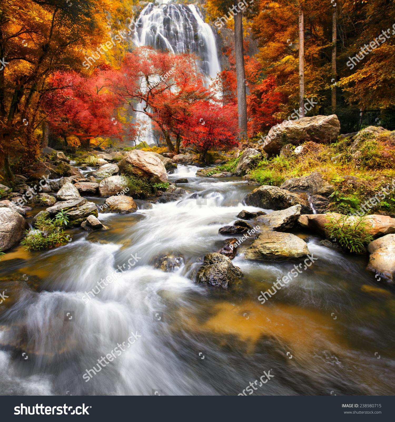 秋天的风景简报