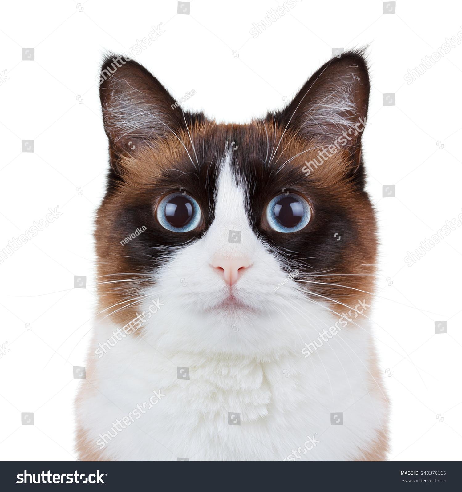 猫在镜头特写肖像-动物/野生生物,物体-海洛创意()-合