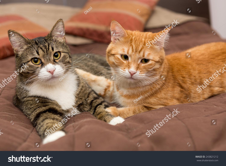 两只斑纹猫,橙色和灰色的友谊-动物/野生生物-海洛()