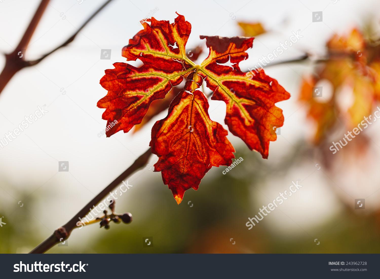 枫叶色彩手绘创意