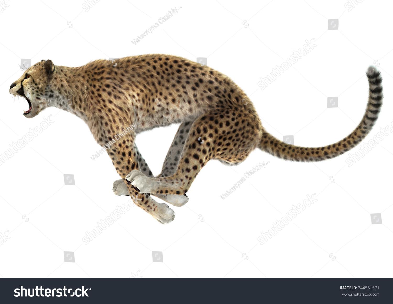 3 d数字跳猎豹孤立在白色背景的渲染-动物/野生生物