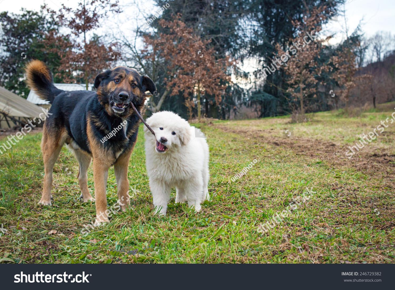 近海岸沼泽地牧羊犬-动物/野生生物