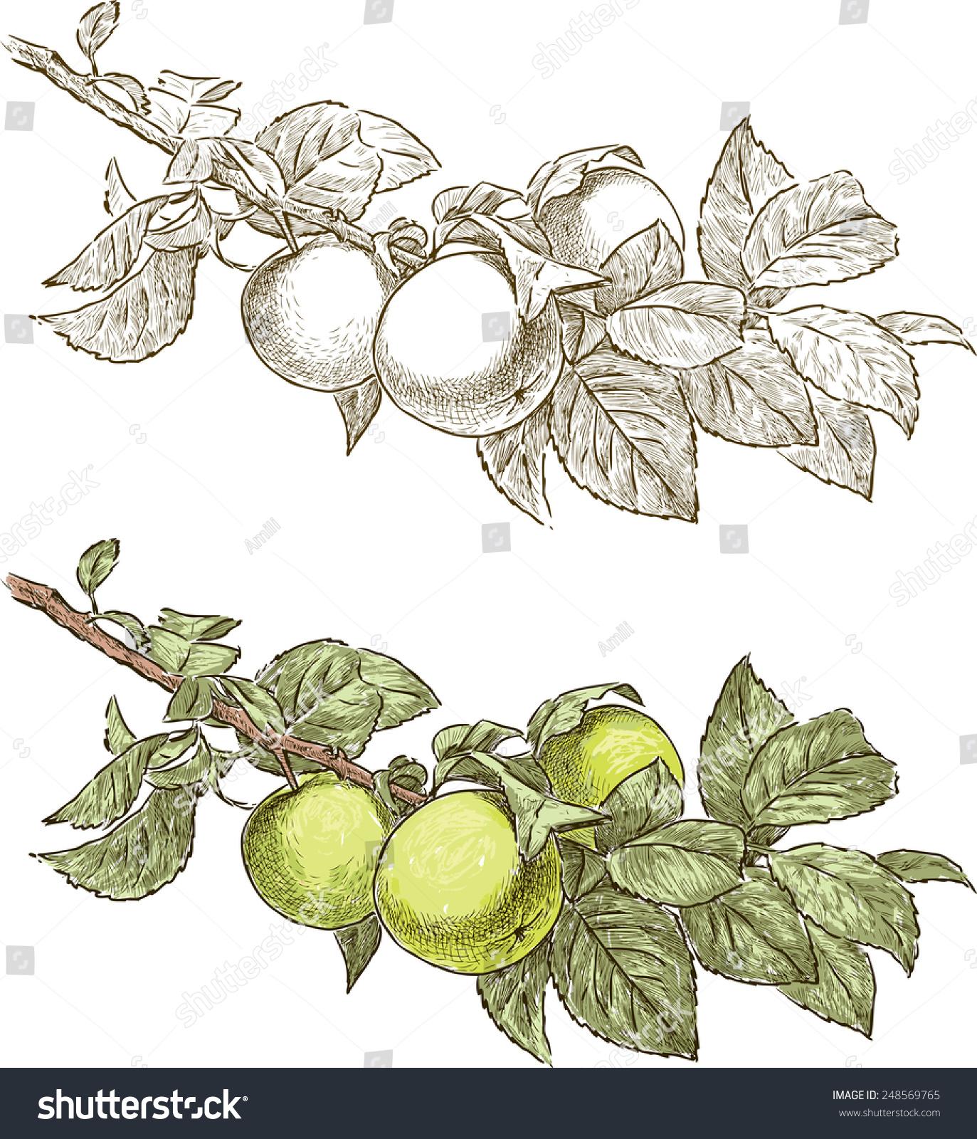 苹果树枝-自然,公园/户外-海洛创意(hellorf)-中国-.