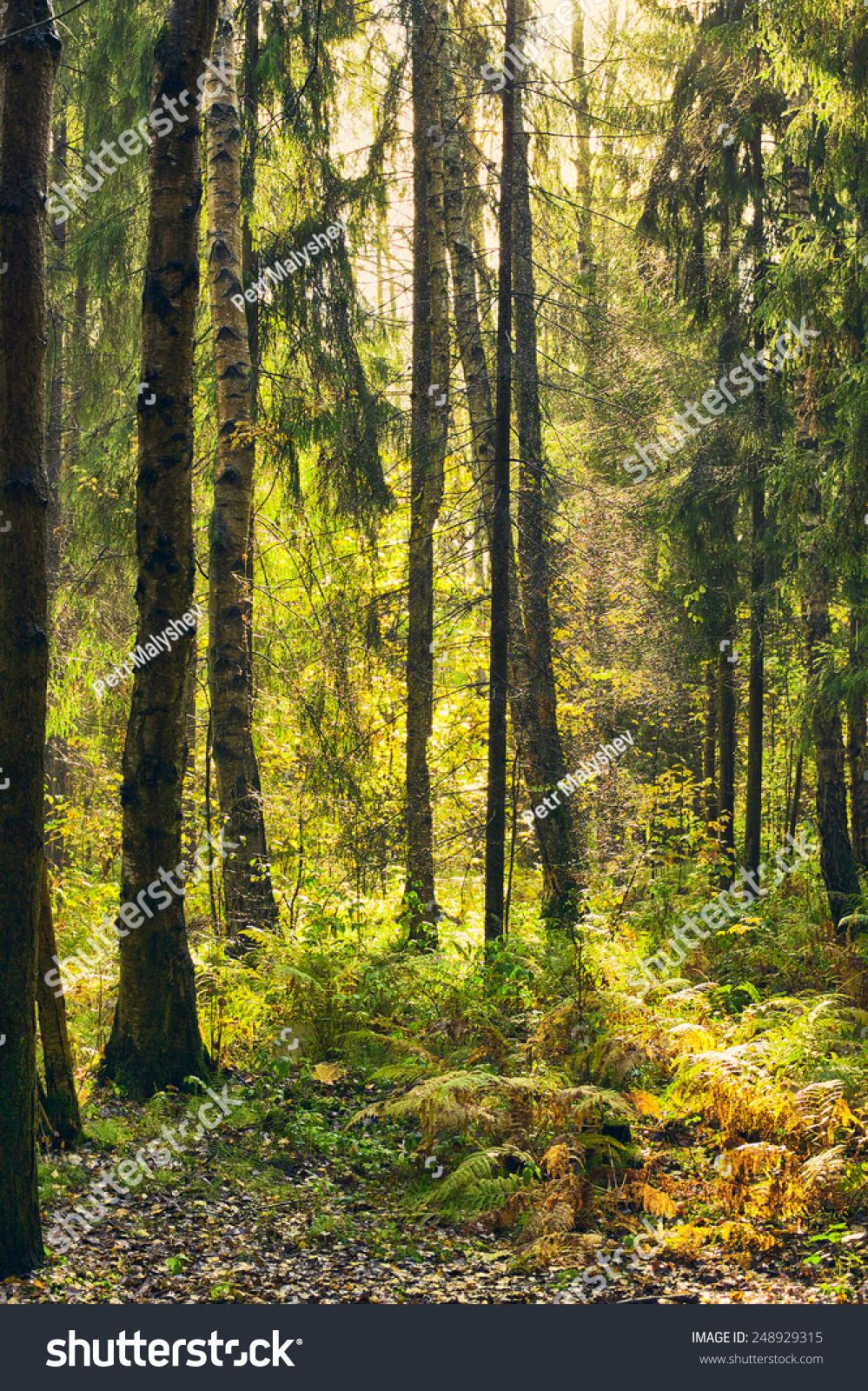 秋天的森林灌木丛雨后的阳光-自然,公园/户外-海洛()