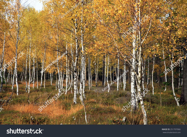 丰富多彩的秋天的森林-自然,公园/-()图片
