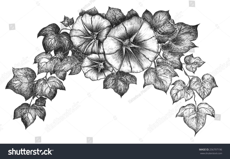 手绘花朵.墨水画.旋花类