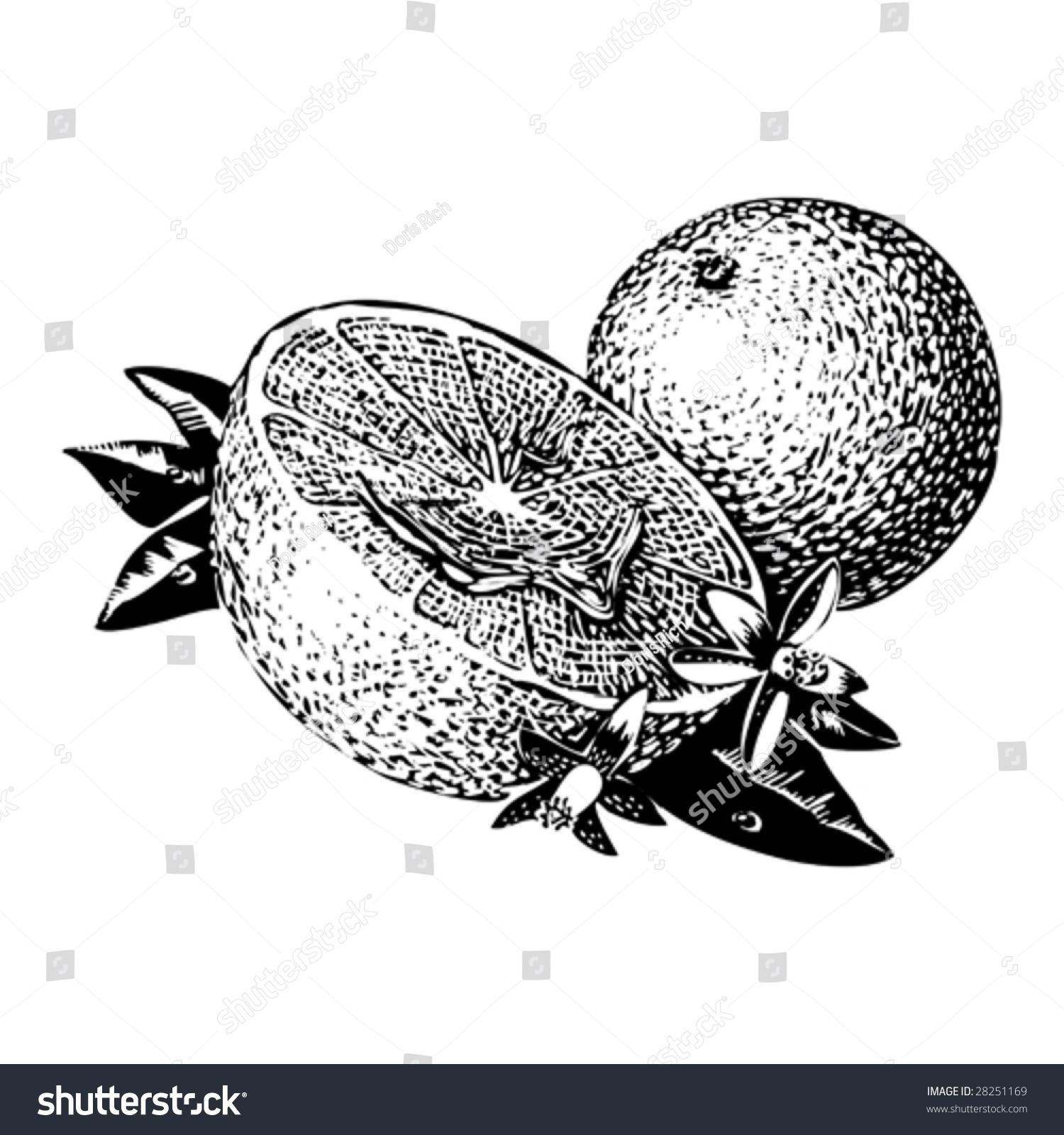 橘子联想图形创意设计