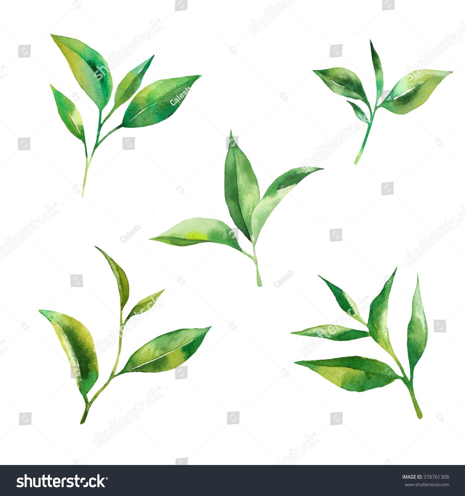 背景 壁纸 绿色 绿叶 设计 矢量 矢量图 树叶 素材 植物 桌面 1500