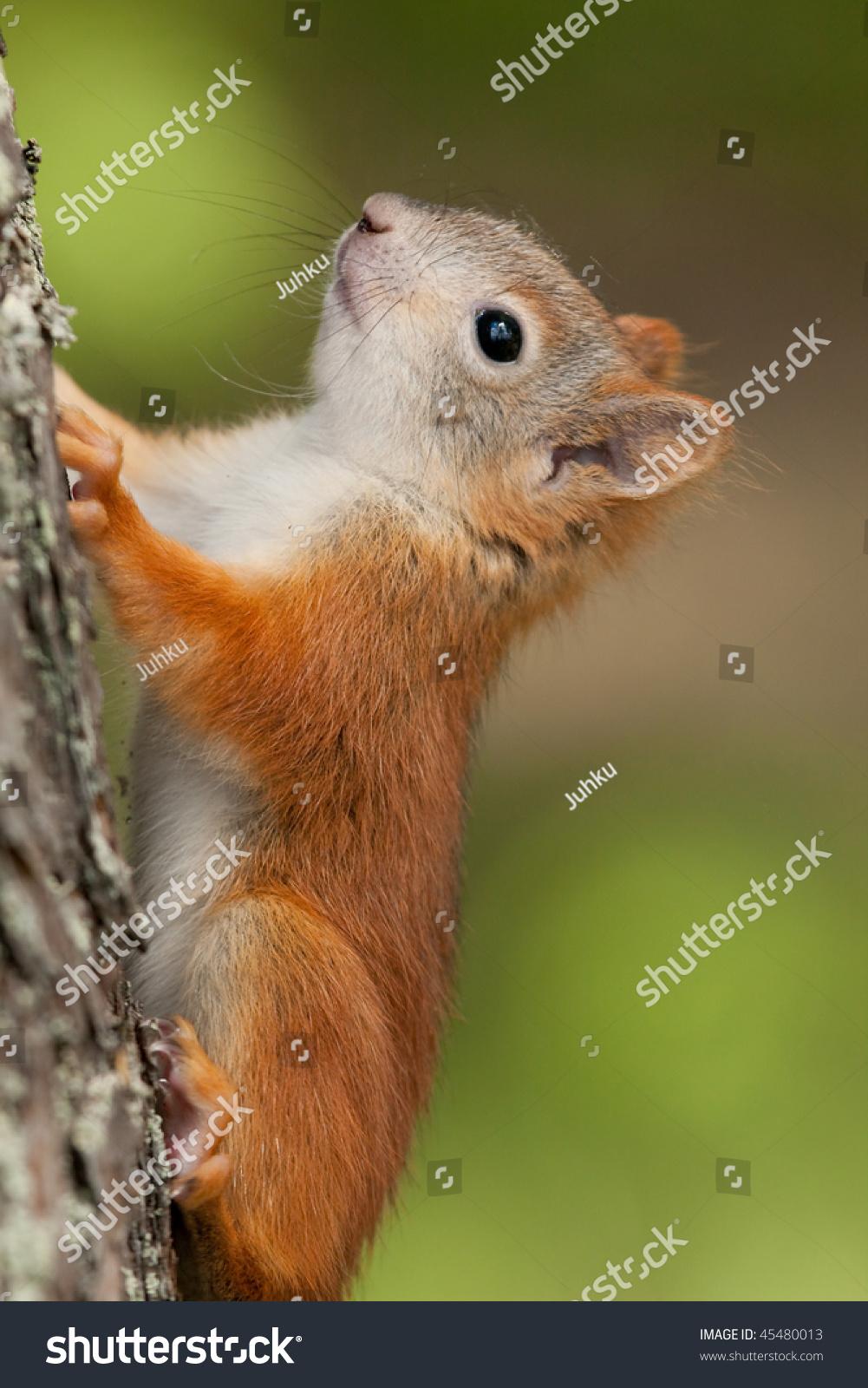 可爱的松鼠在树-动物/野生生物