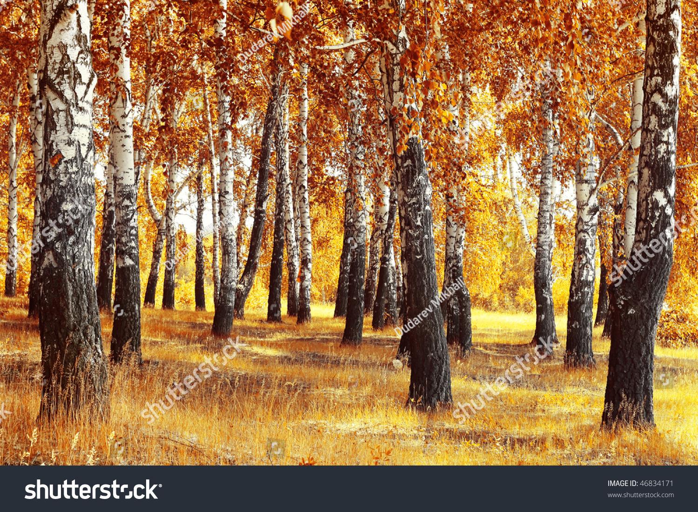 秋天黄色的桦树林和干香草-公园/户外,自然-海洛创意