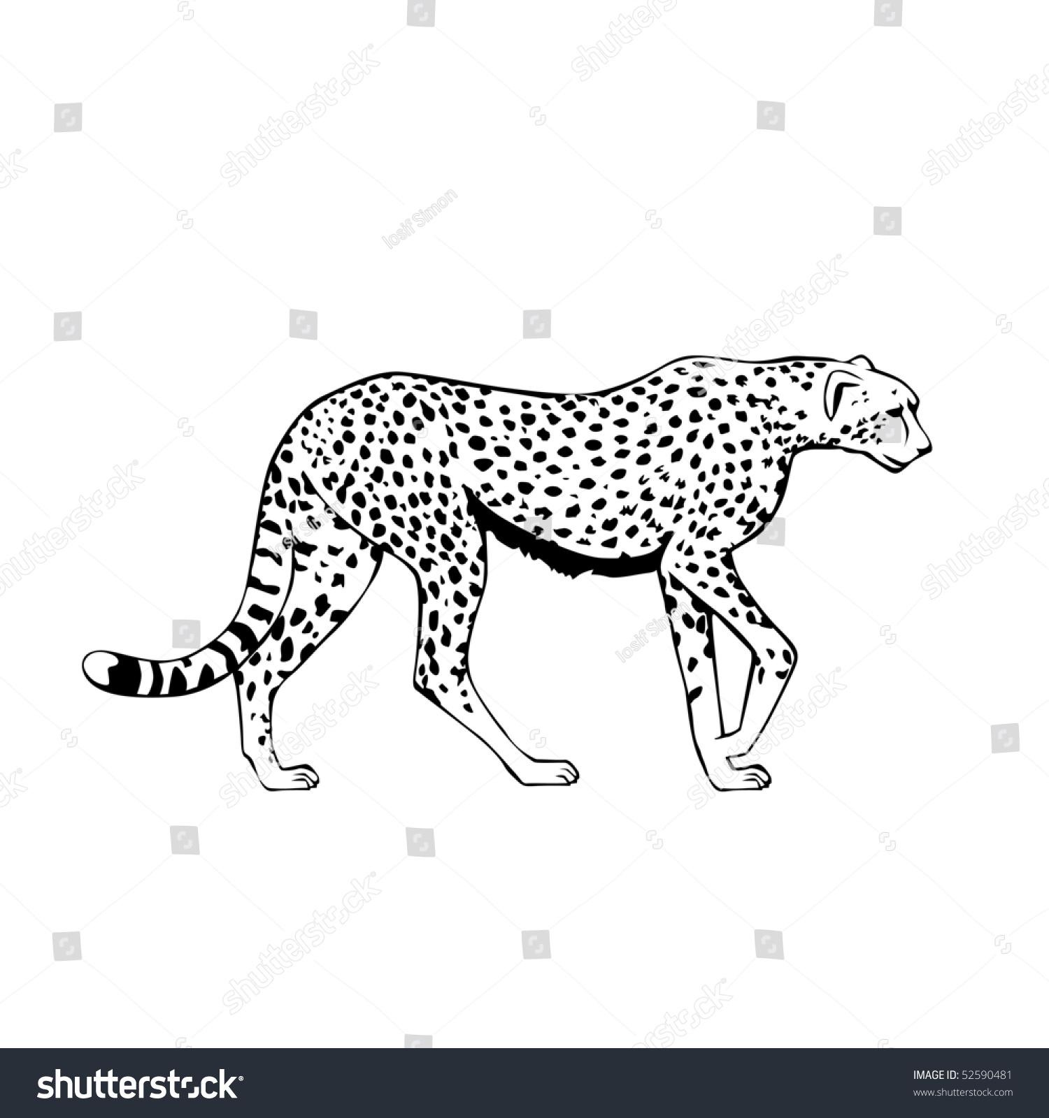 黑色和白色猎豹矢量插图-动物/野生生物