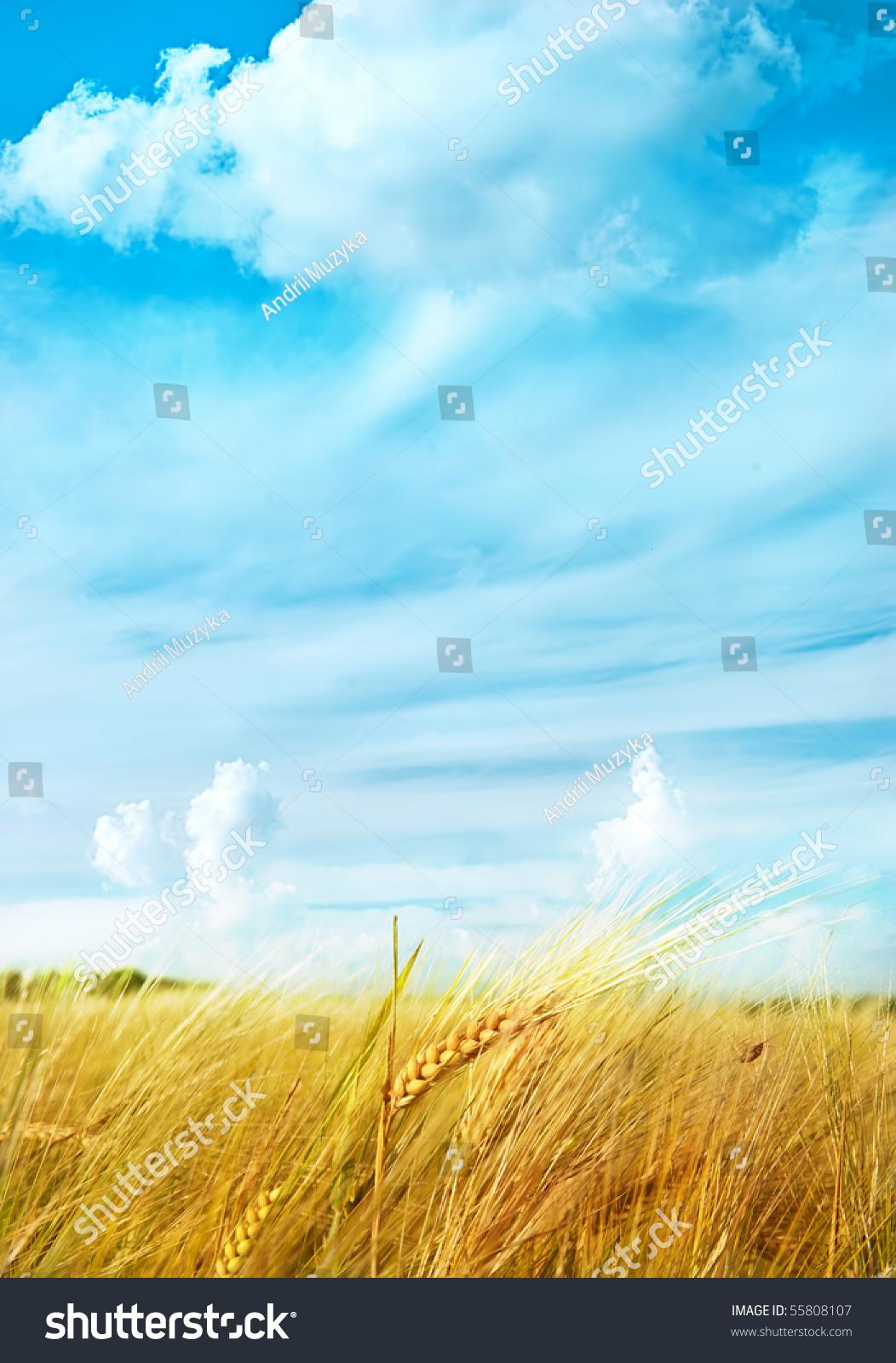 壁纸 成片种植 风景 植物 种植基地 桌面 1052_1600 竖版 竖屏 手机