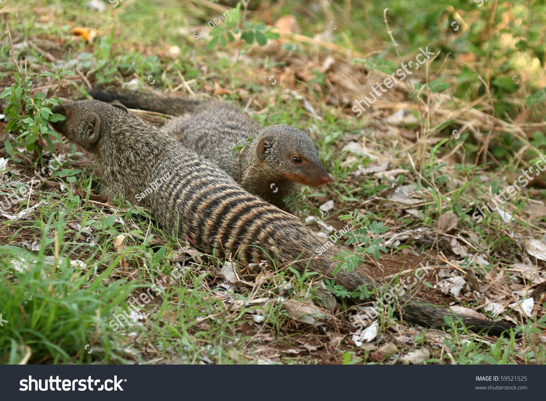 曼雅拉湖国家公园——野生动物保护区在坦桑尼亚