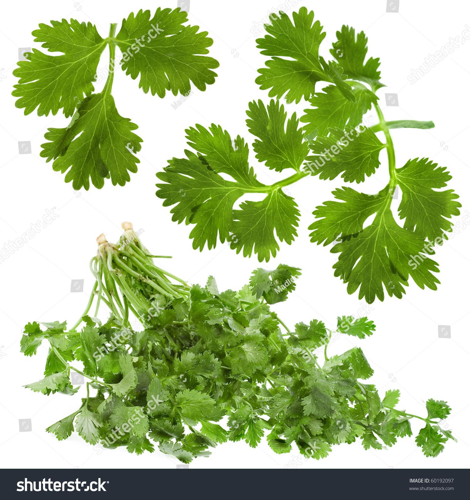 背景 壁纸 绿色 绿叶 树叶 植物 桌面 1500_1598