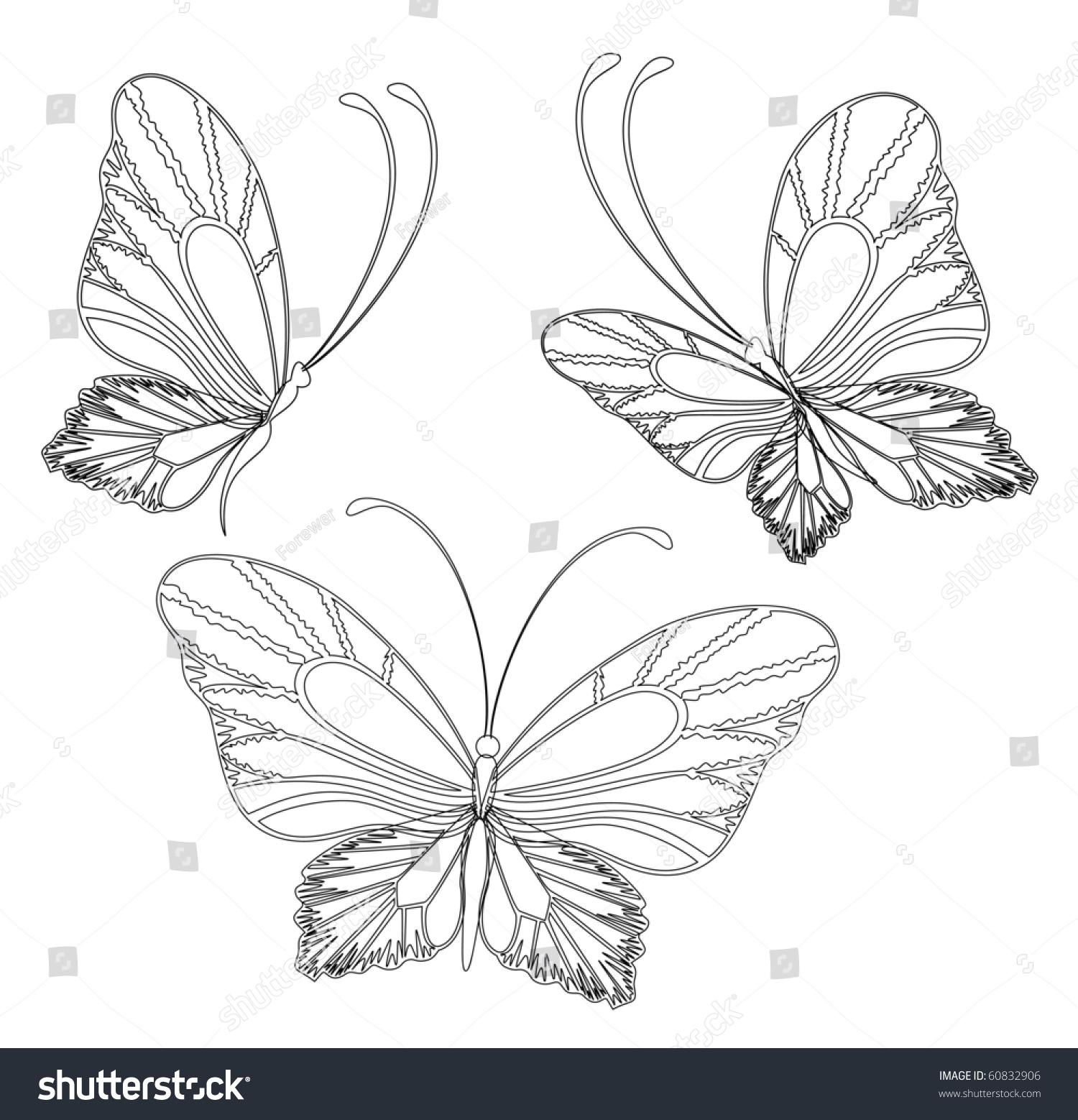 矢量设计美丽的蝴蝶-动物/野生生物