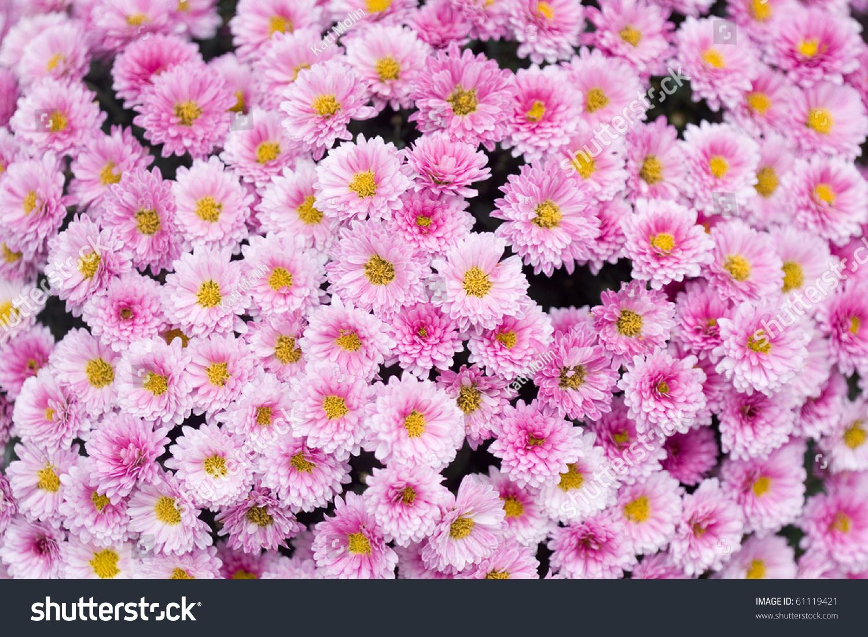 靠近美丽的粉红色花的背景