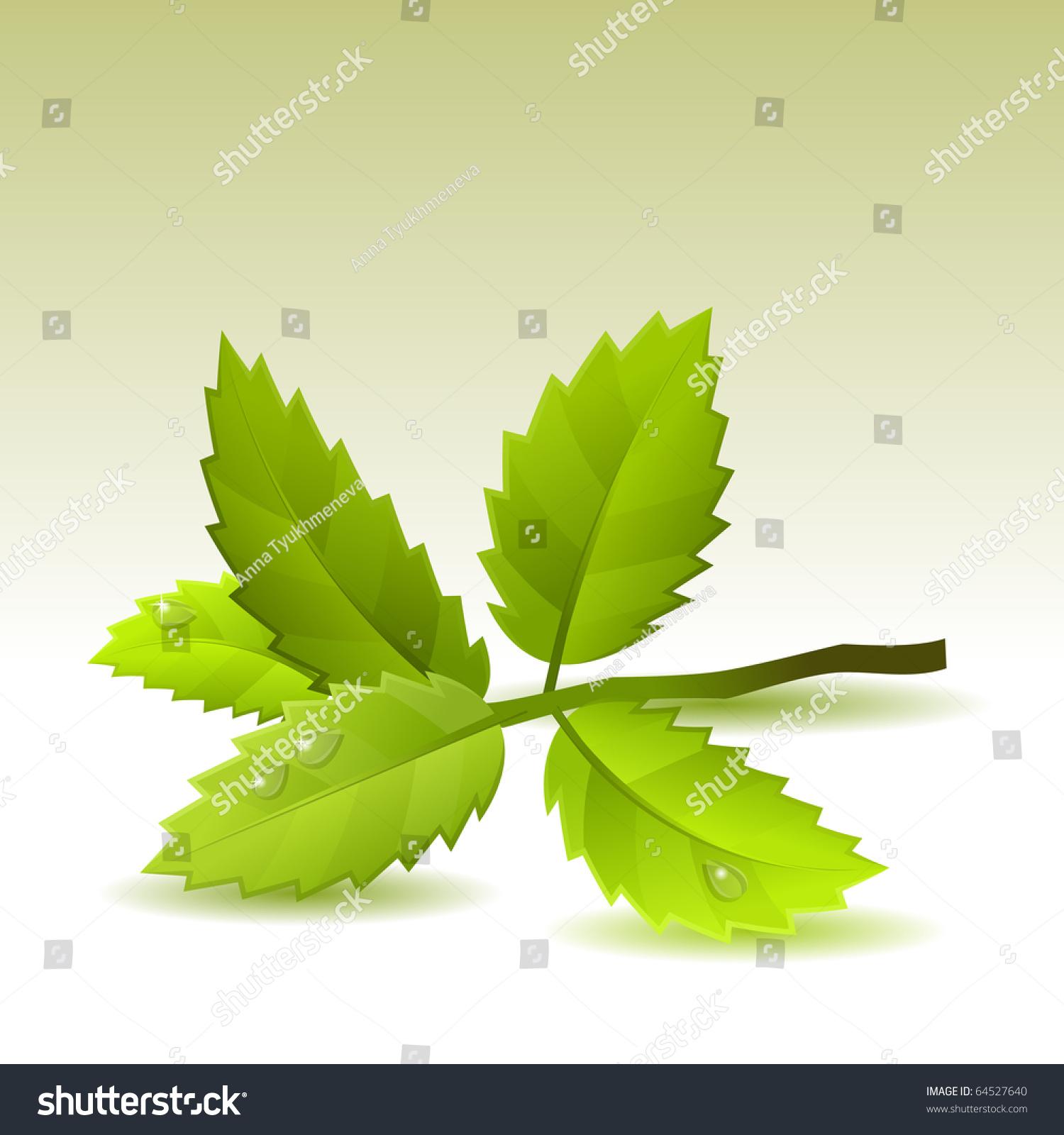 绿色的叶子孤立在白色背景上-插图/剪贴图,物体-海洛