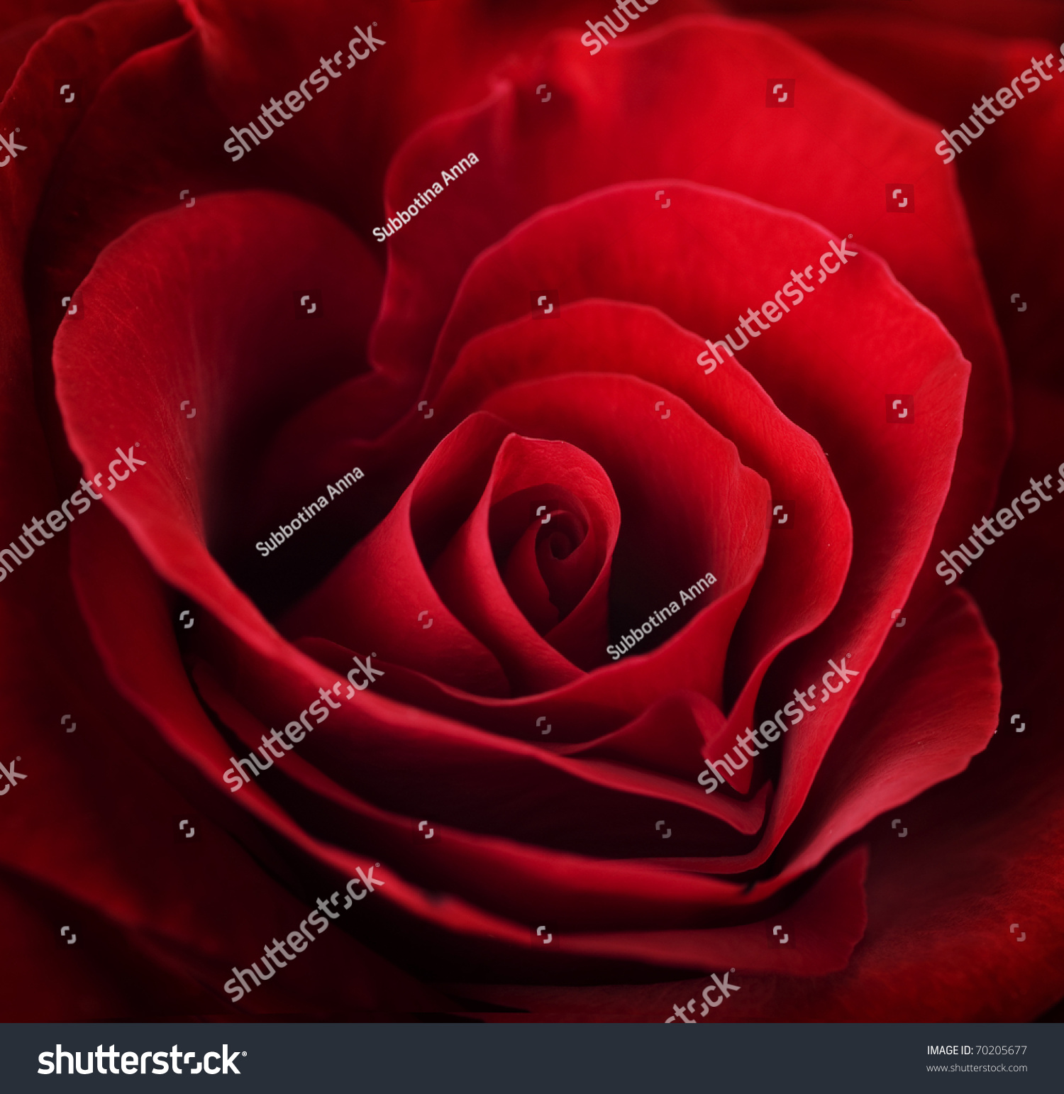 Romantic Red Roses with Heart Necklace  1800flowerscom