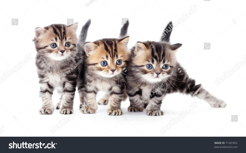三只小猫条纹平纹孤立-动物/野生生物,交通运输-海洛