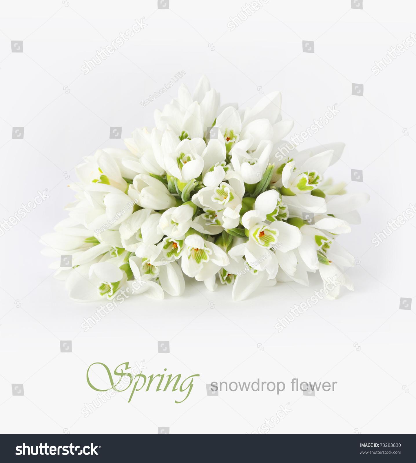 鲜花网页背景素材