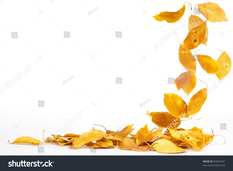 秋叶落在地上图片